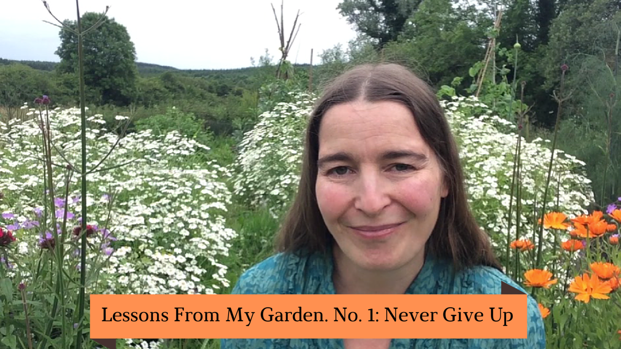 Never Give Up: Life Lesson 1 from my Garden