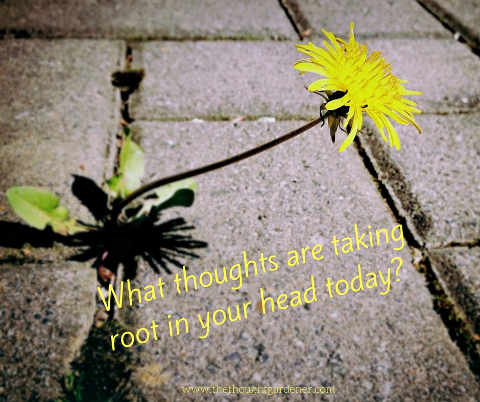 mind weeds